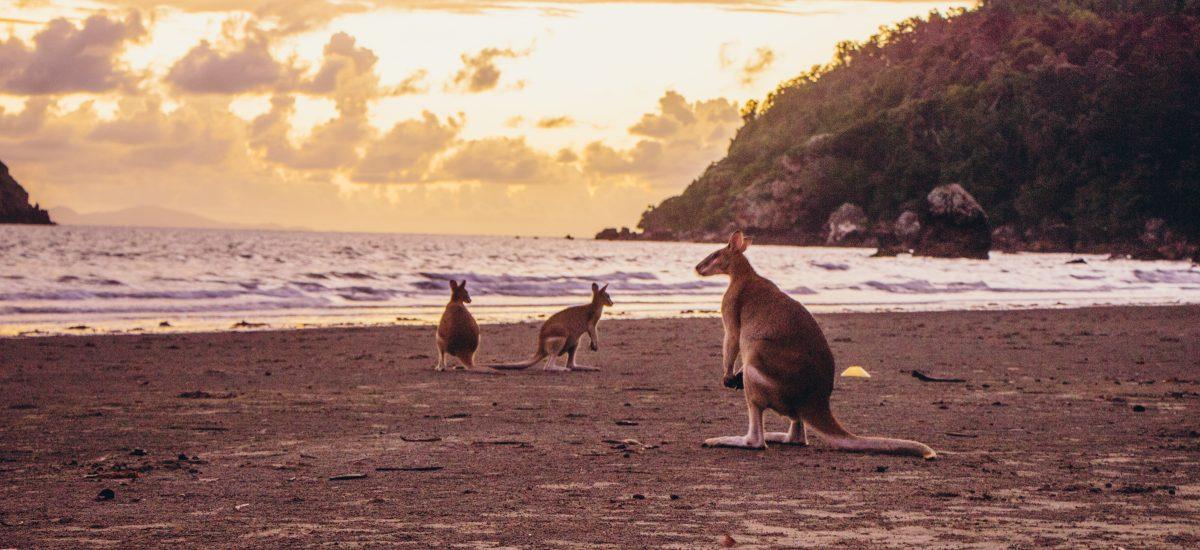10 jours dans le Tropical North Queensland